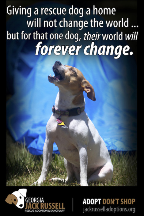 Jack Russell Rescue poster